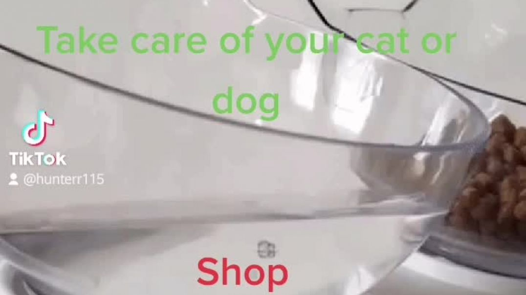 Bowl for dogs and cats