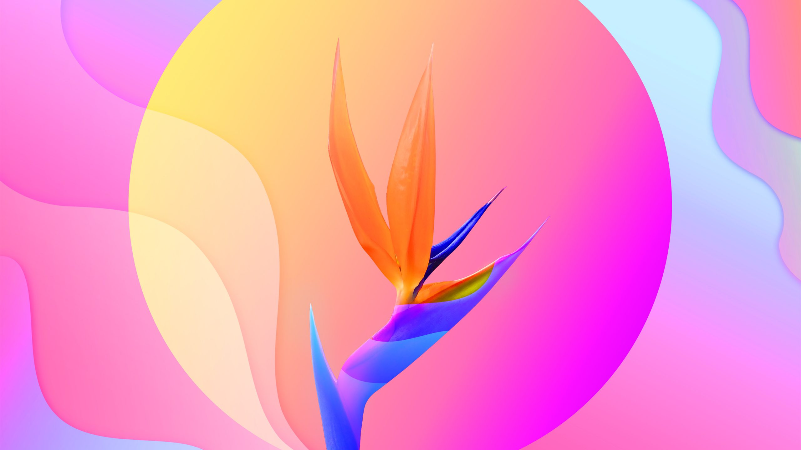 colorful-abstract-flower-4k-hd-wallpaper