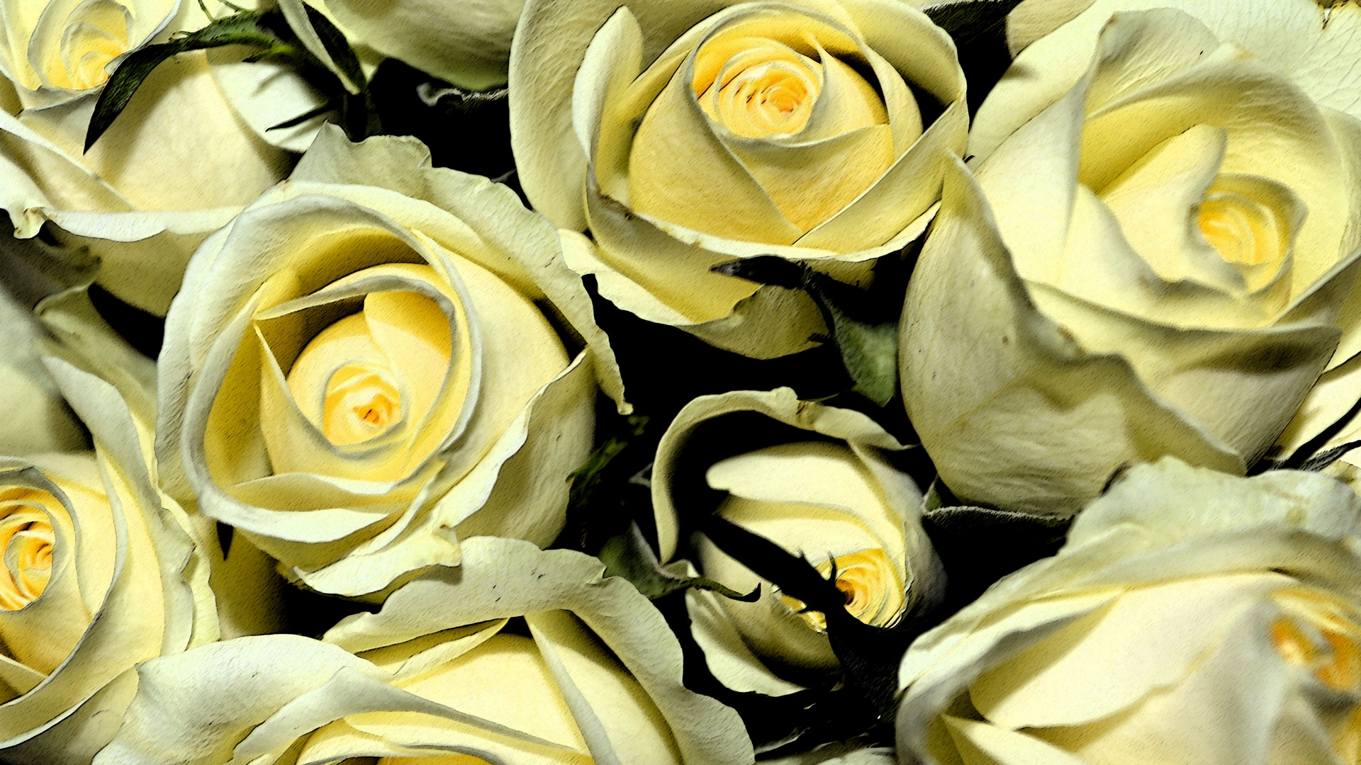 yellow roses buds flowers bouquet x