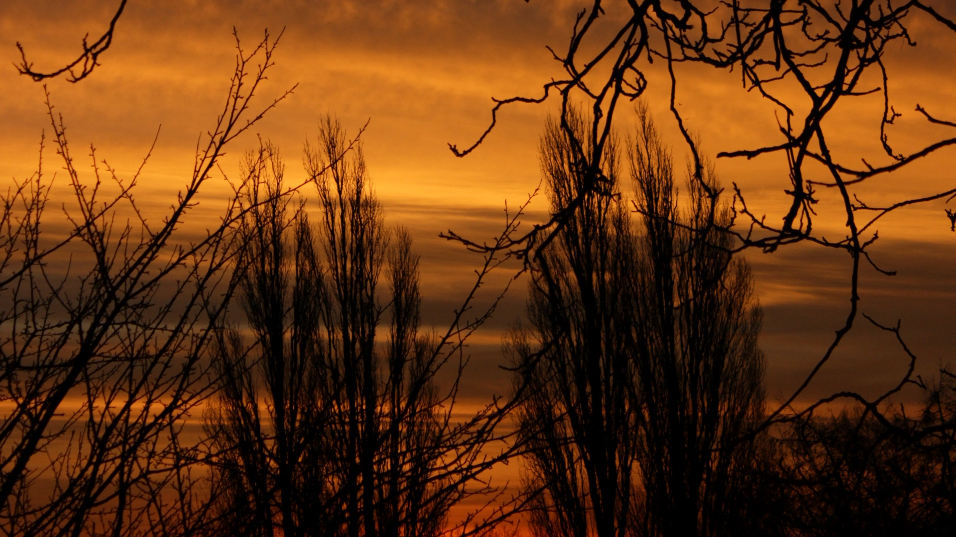 branch sunset silhouette
