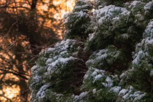 bush snow winter Hd Wallpaper