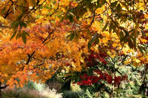 fall trees leaves nature Hd Wallpaper