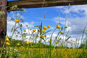 fence flowers field yellow protection boards solarly Hd Wallpaper