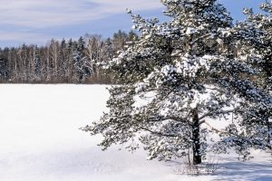 field snow snowdrifts trees Hd Wallpaper