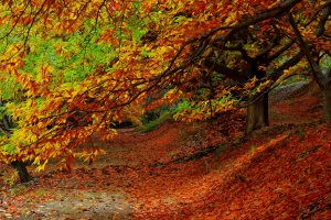 forest autumn foliage trees Hd Wallpaper