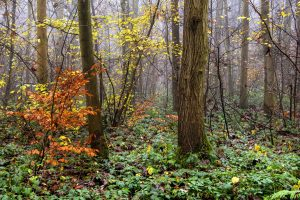 forest branches trees Hd Wallpaper