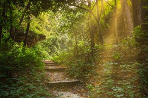 forest path stairs Hd Wallpaper