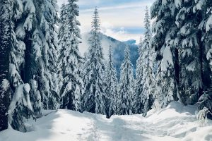 forest winter snow Hd Wallpaper