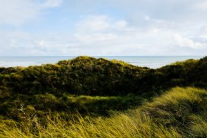 hills grass coast Hd Wallpaper