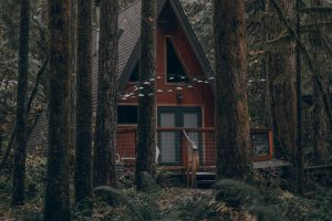 house forest trees Hd Wallpaper