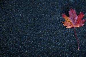 leaf maple autumn Hd Wallpaper