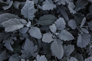 leaves plant carved Hd Wallpaper