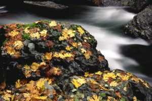 leaves stones water dry autumn Hd Wallpaper