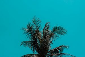palm tree top branches Hd Wallpaper