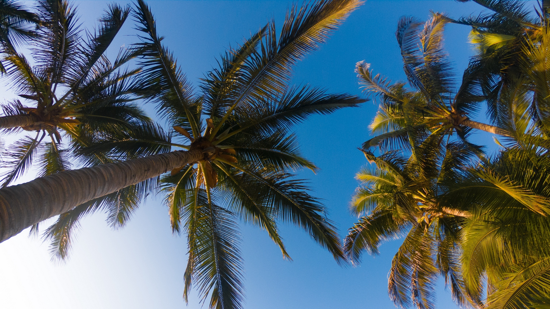 palm trees sky branches