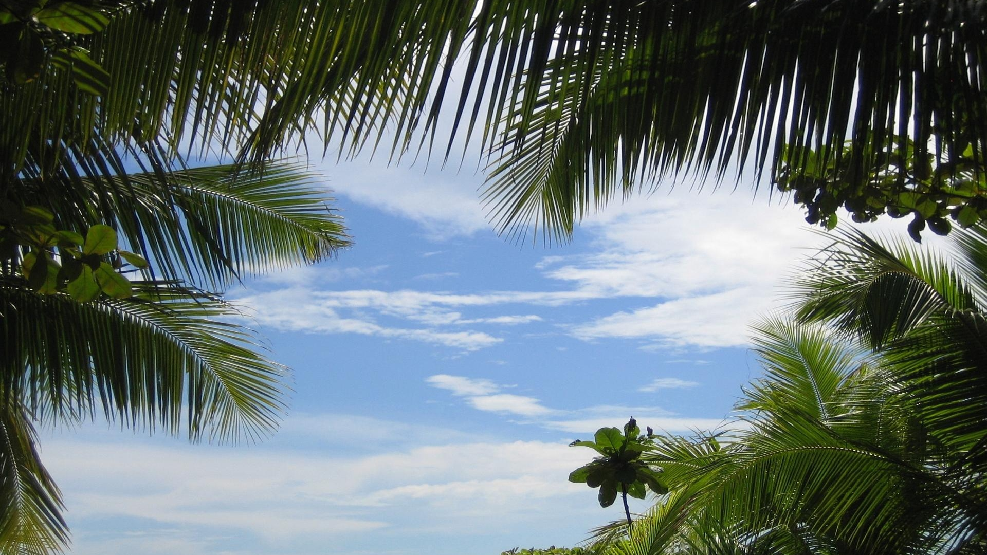 palm trees sky branches green azure background