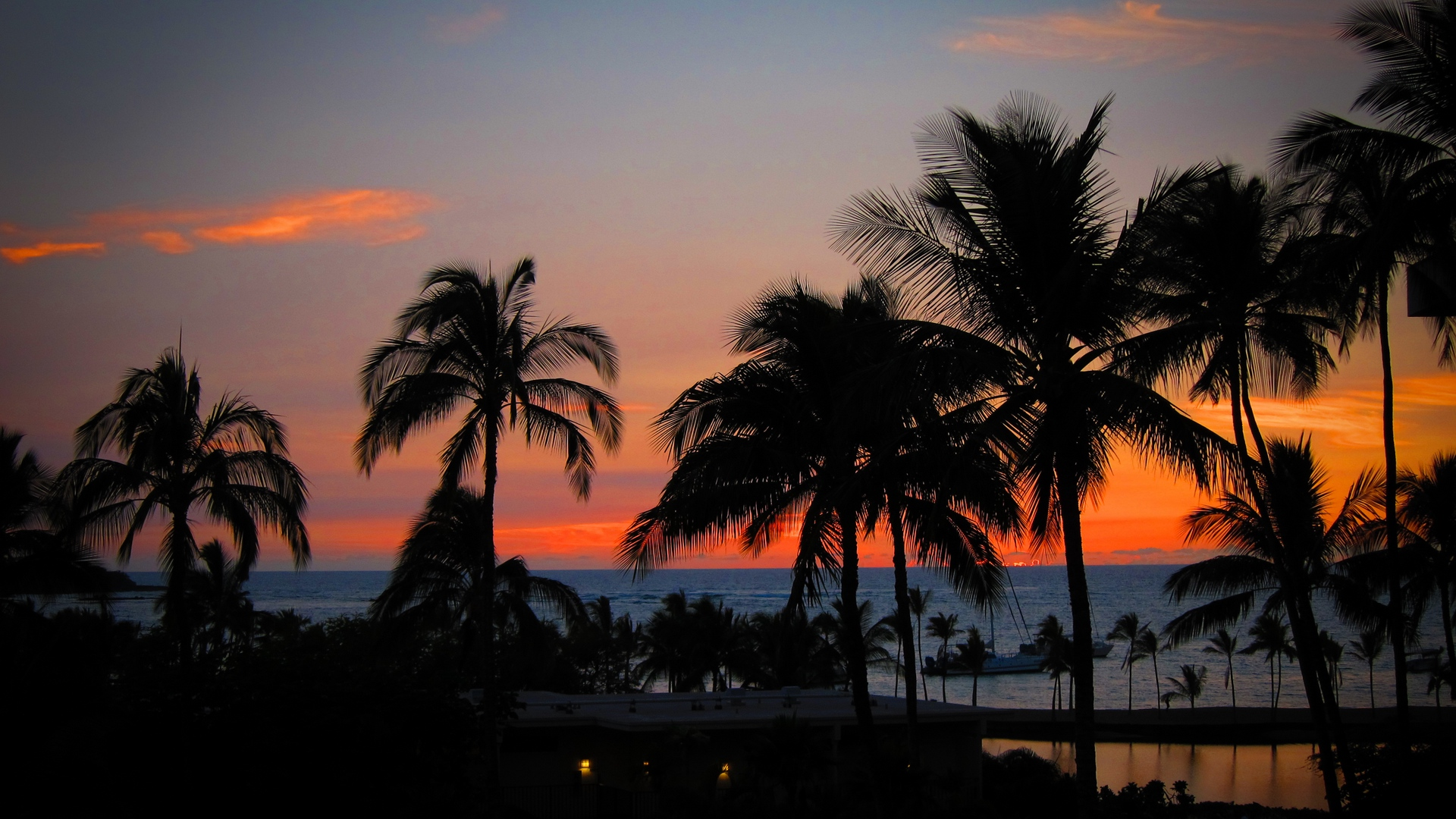 palm trees sunset hawaii