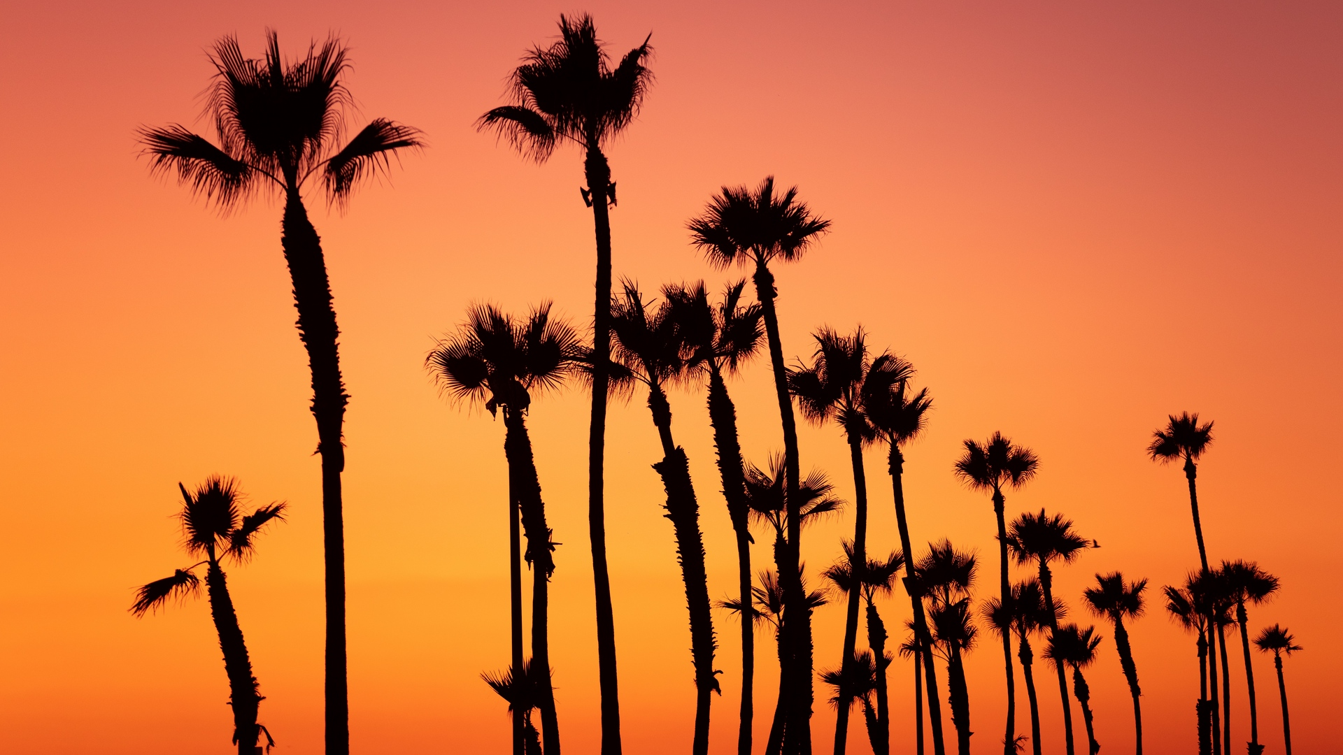 palm trees sunset sky