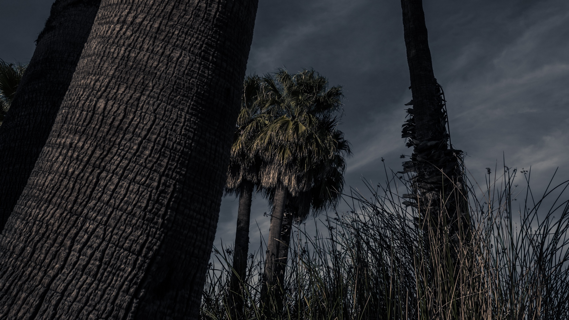 palm trees trees grass