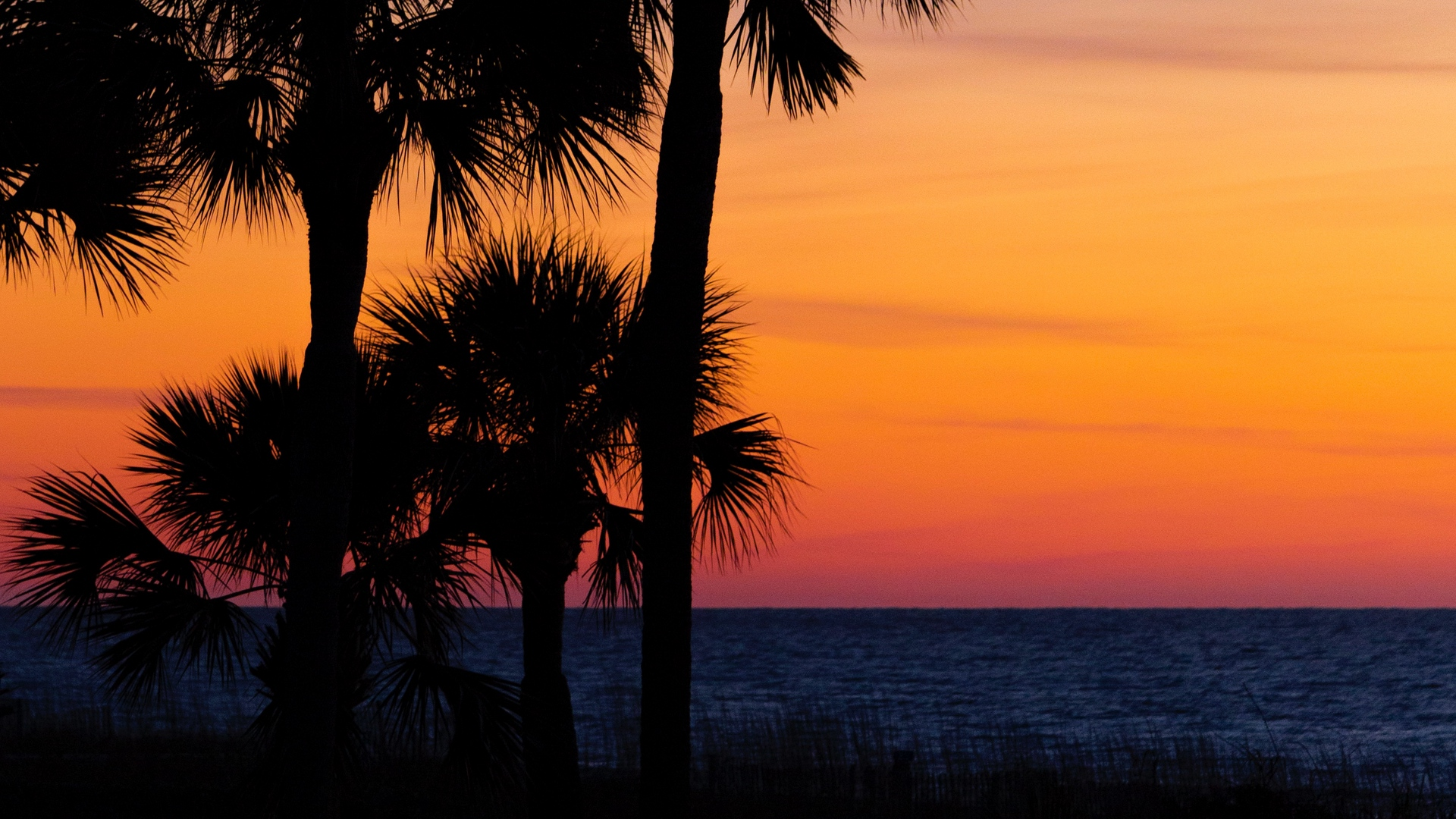 palm trees trees sunset