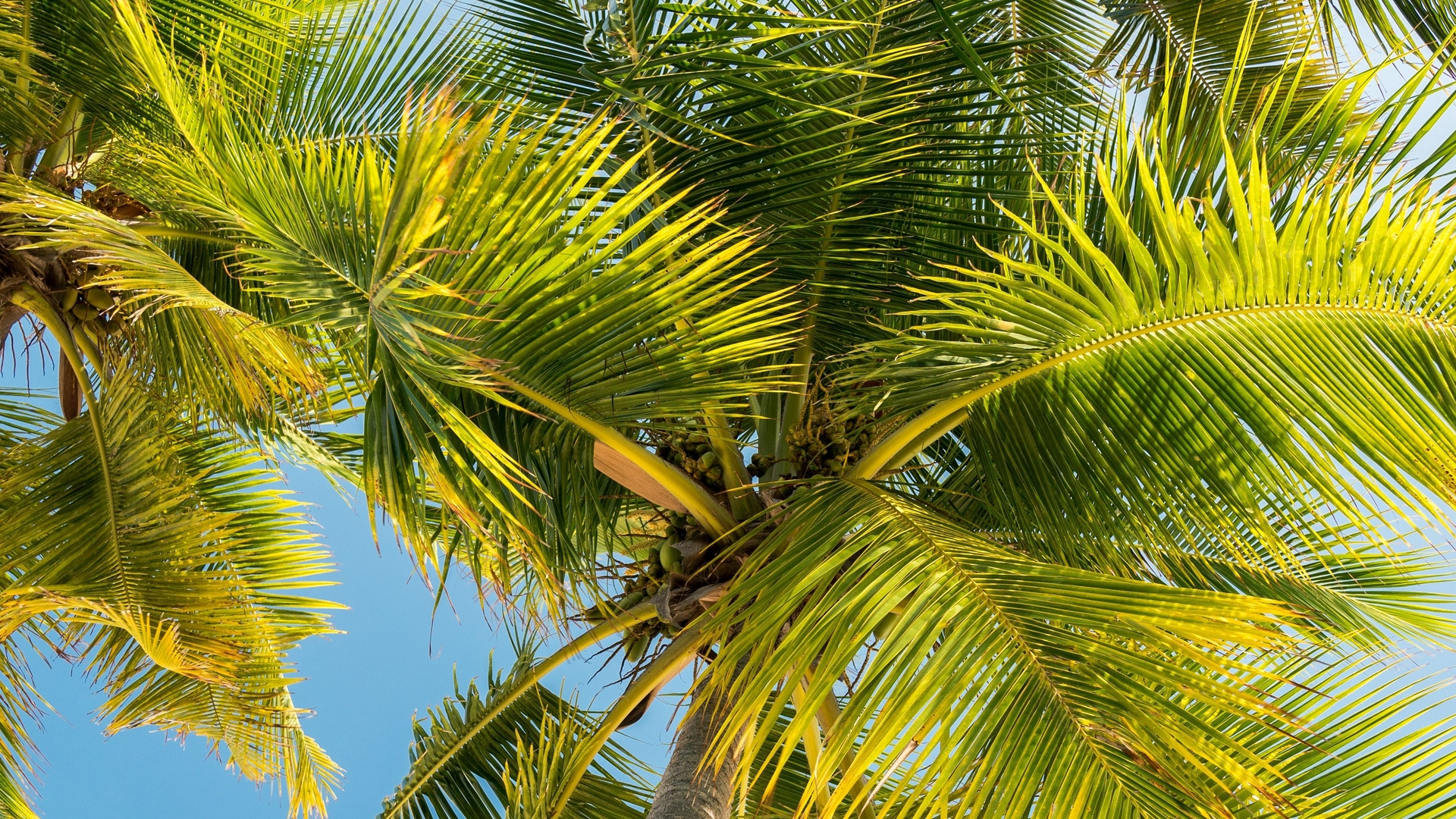palm trees trunk branches