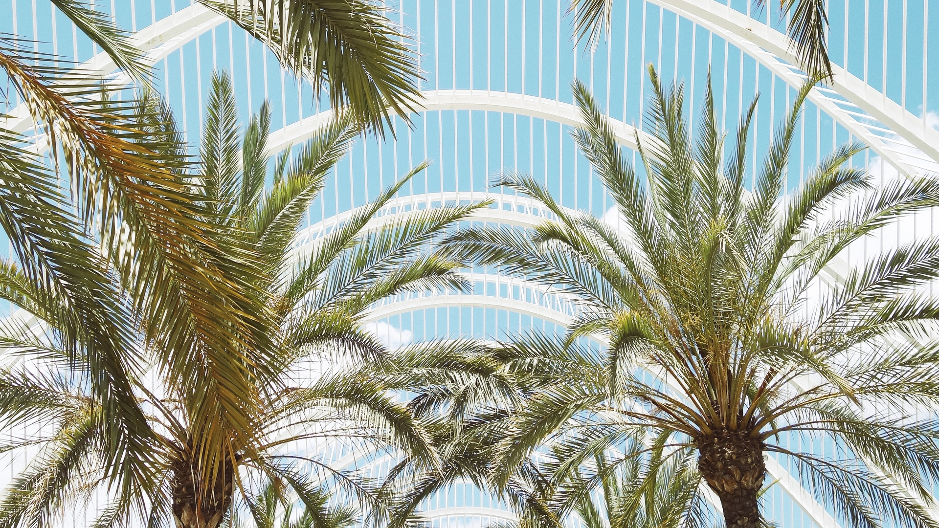 palms branches roof