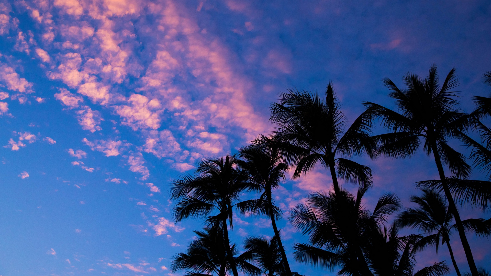 palms clouds outlines