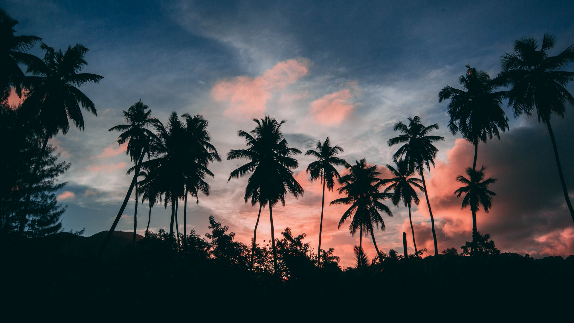 palms outlines sunset