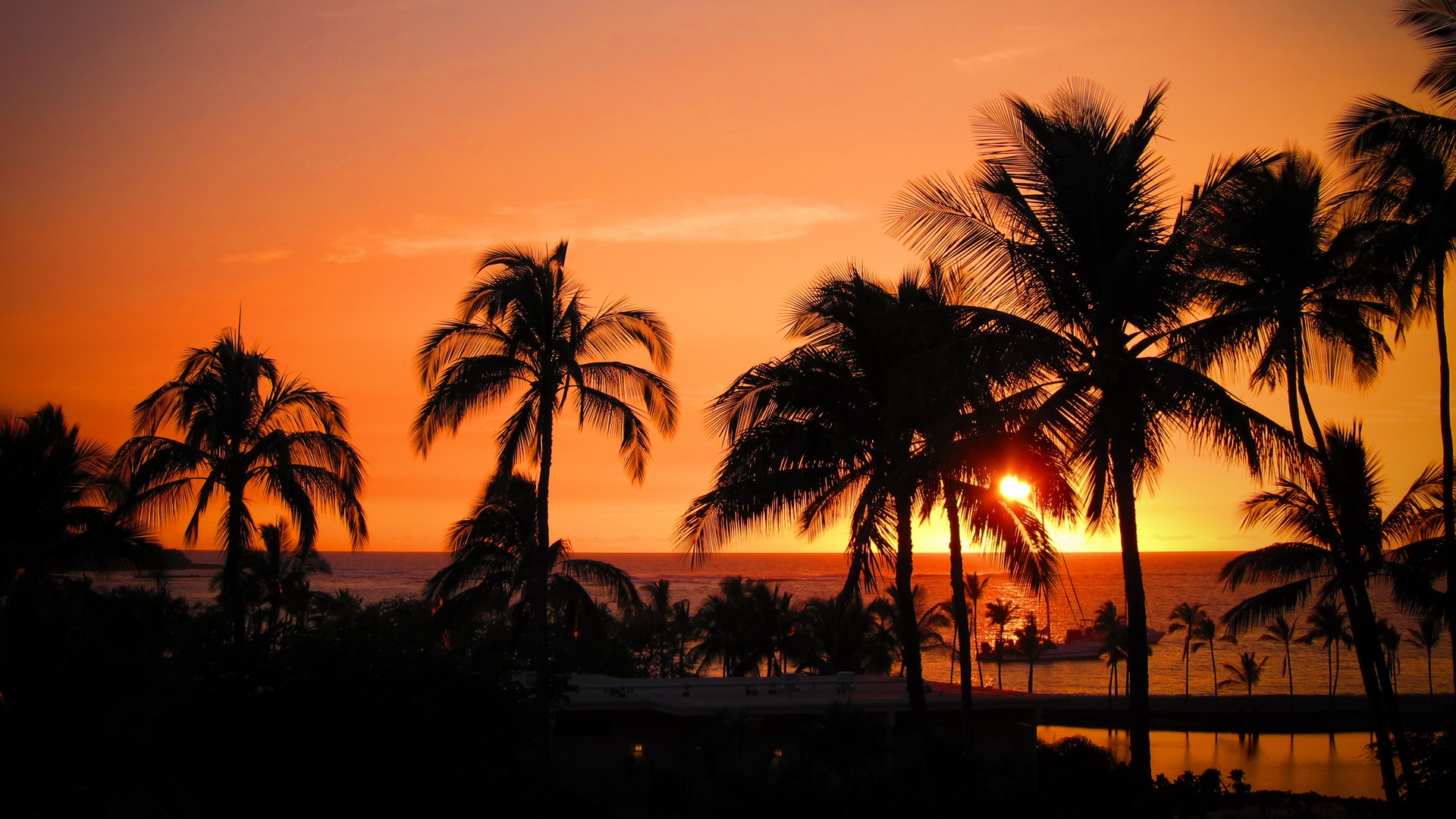 palms sunset hawaii