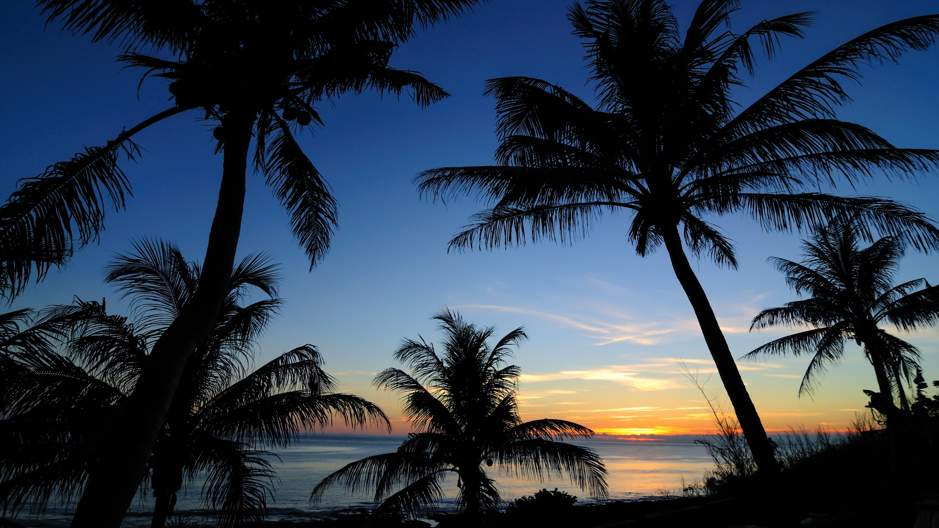 palms sunset sea