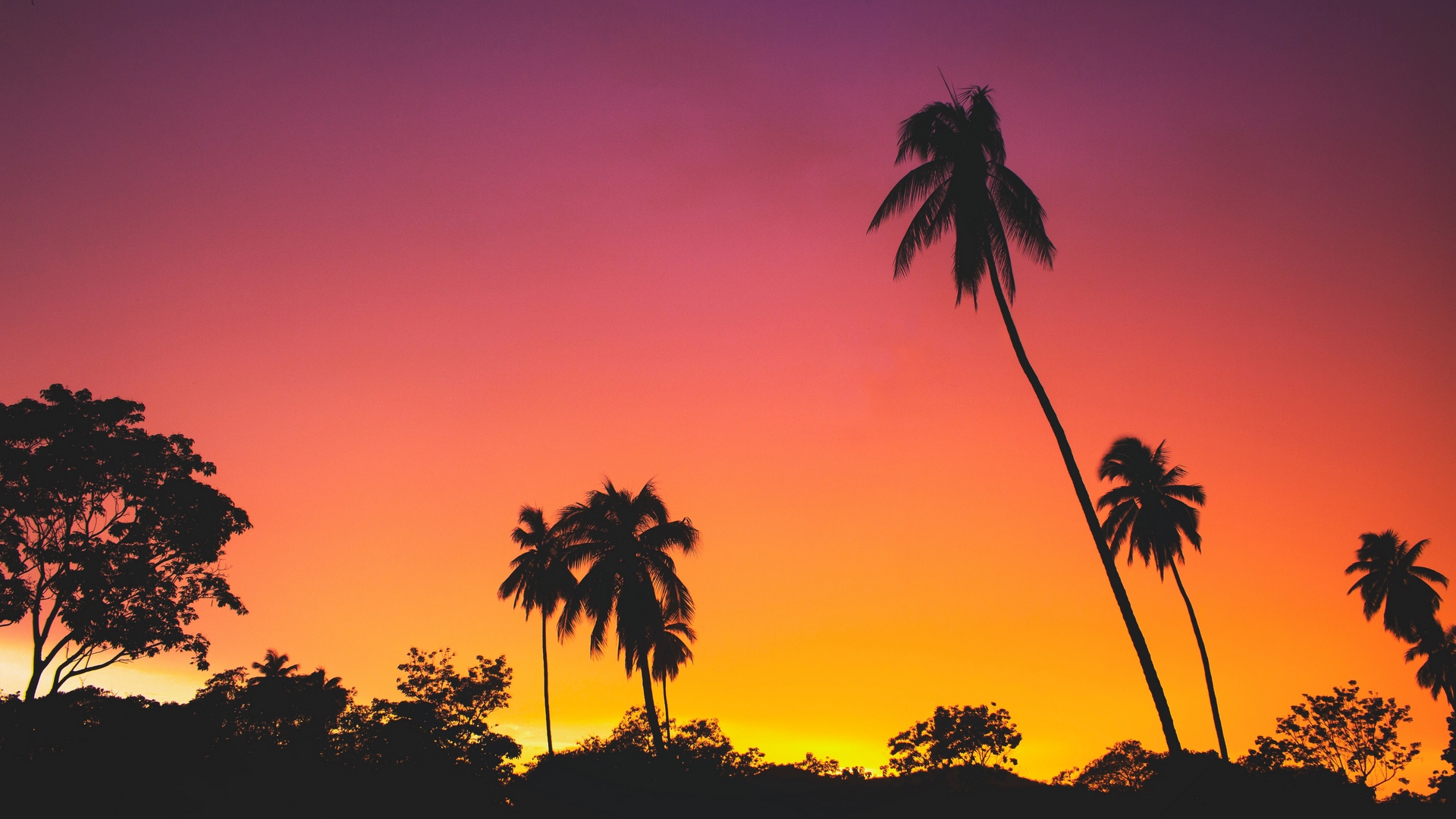 palms sunset silhouettes