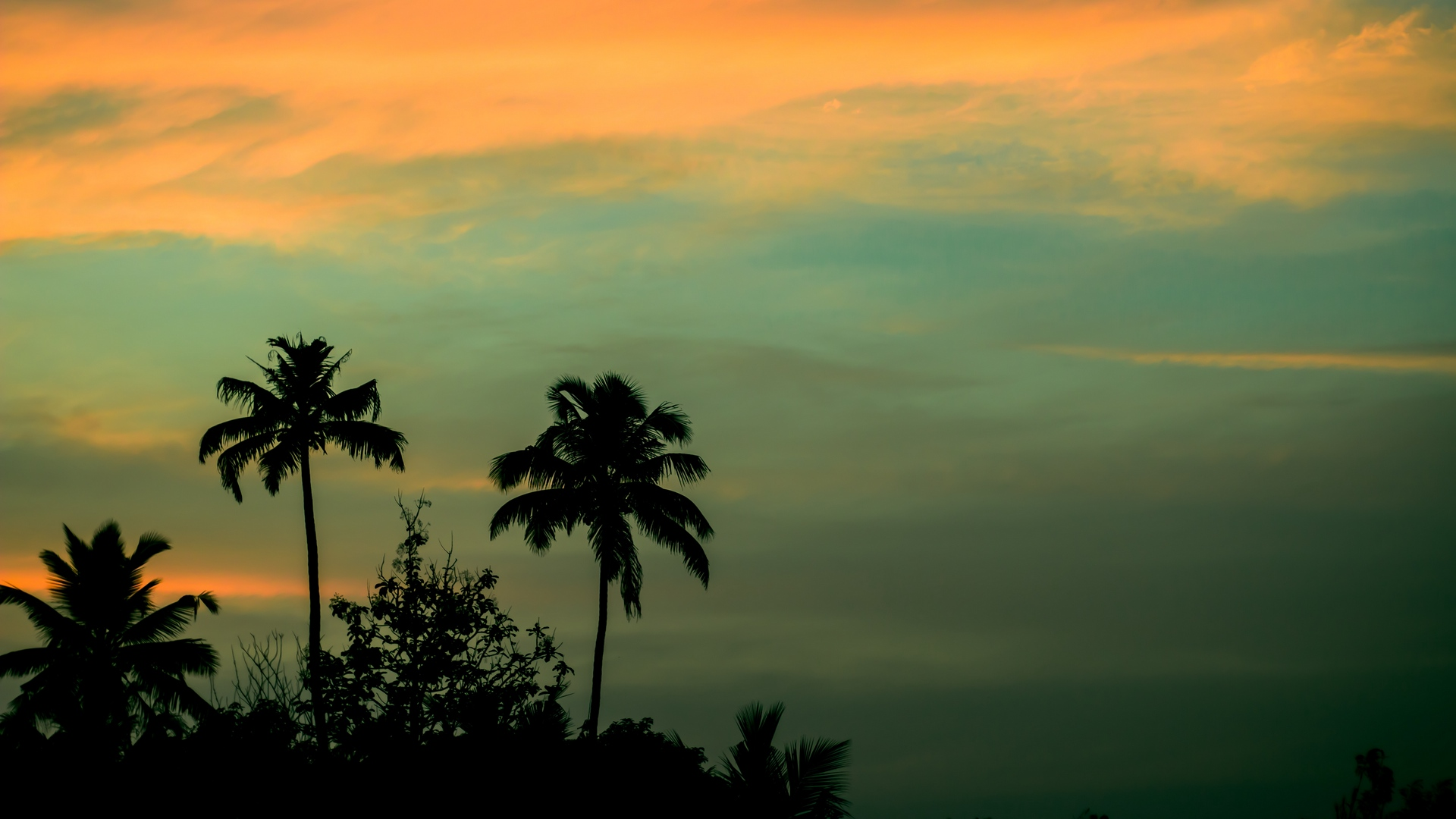 palms sunset sky