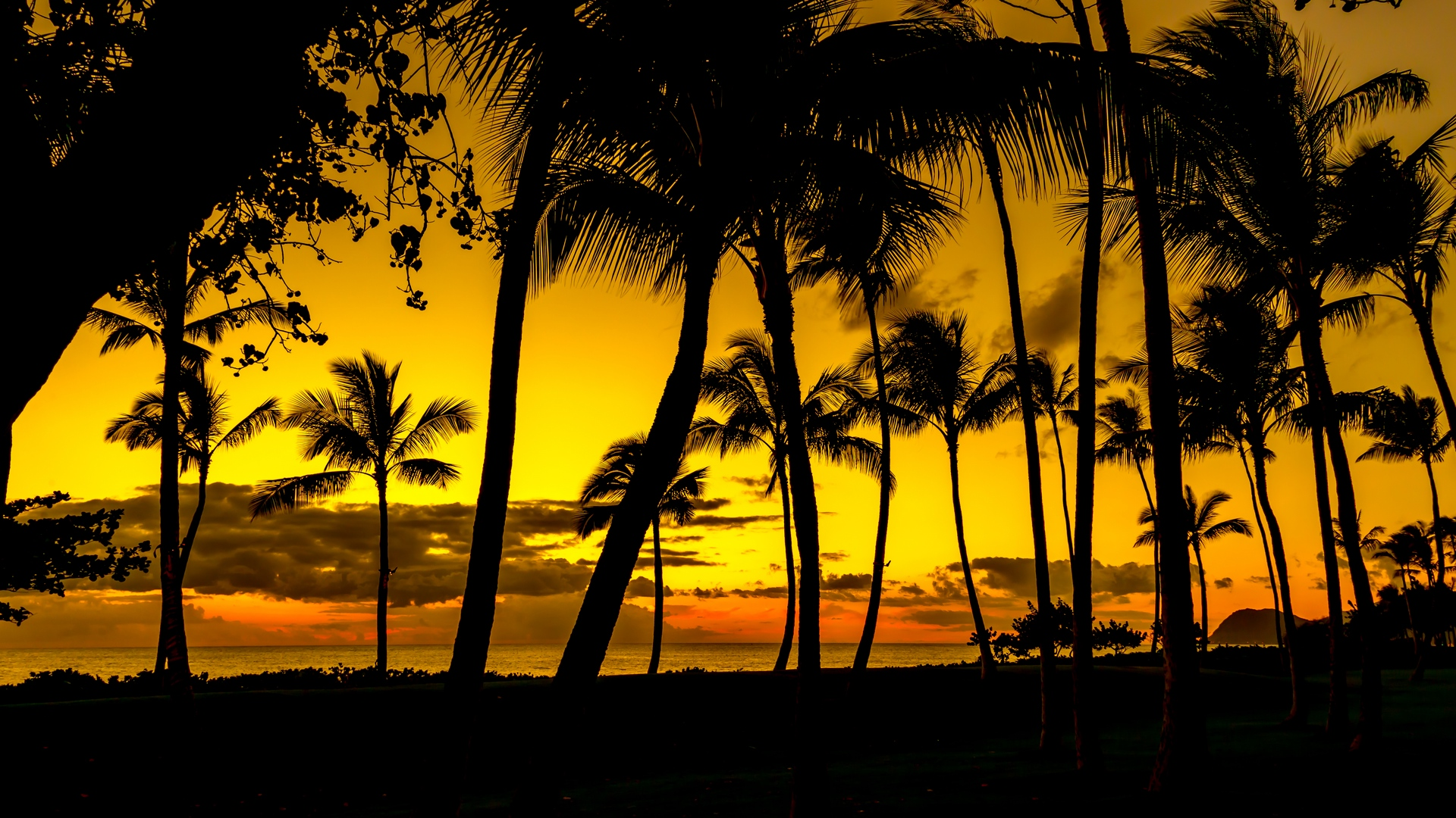 palms sunset tropics
