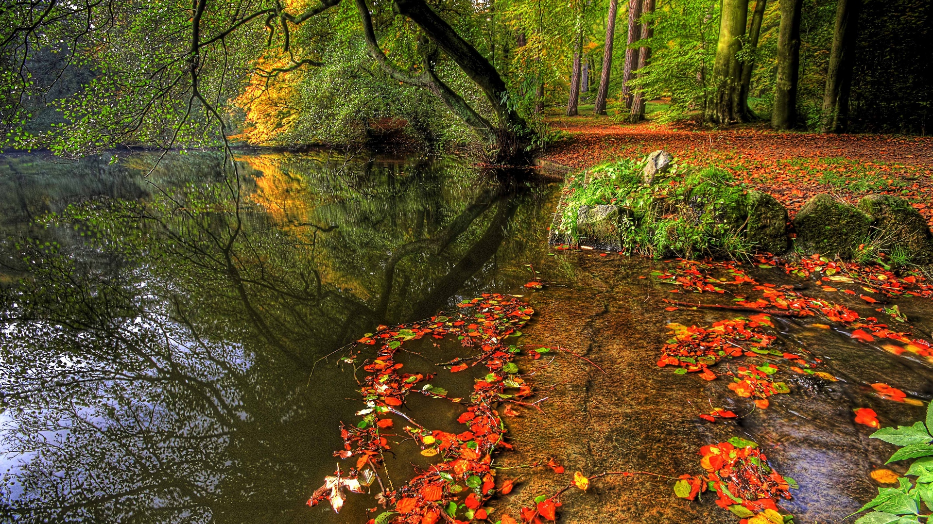 park autumn leaves pond trees plate