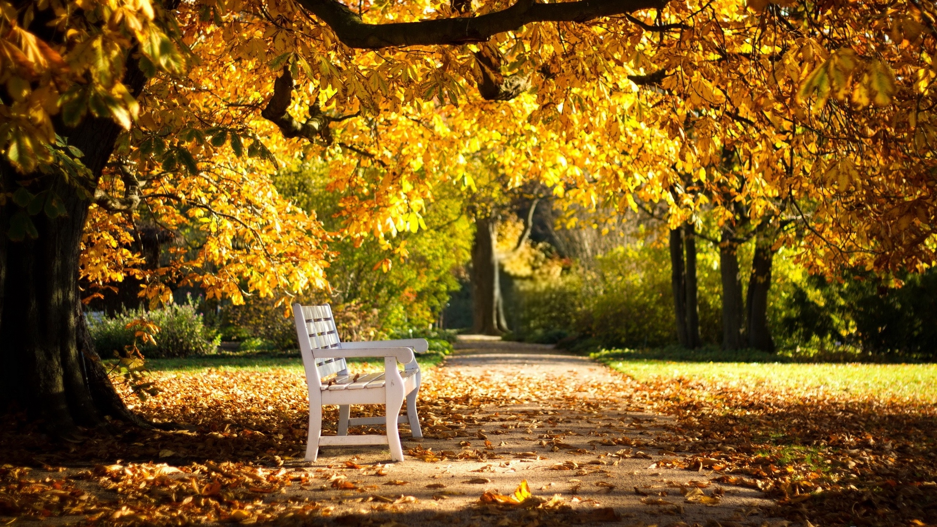 park bench foliage autumn