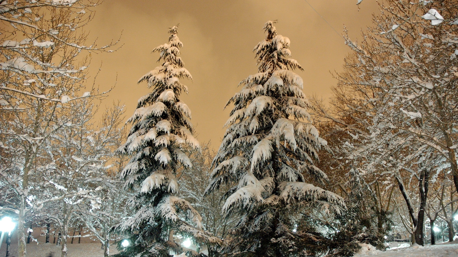 park fir trees snow light lamp sky heavy clouds winter snowdrifts cover