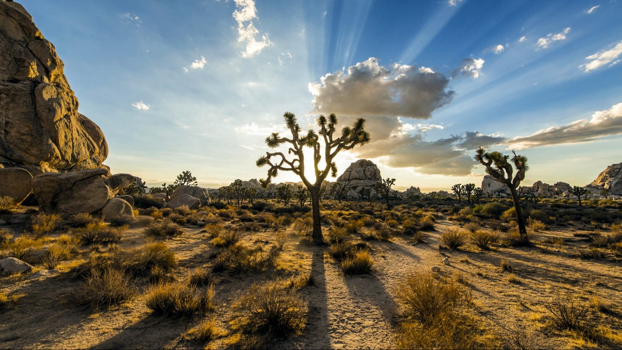 park joshua tree usa plants sky