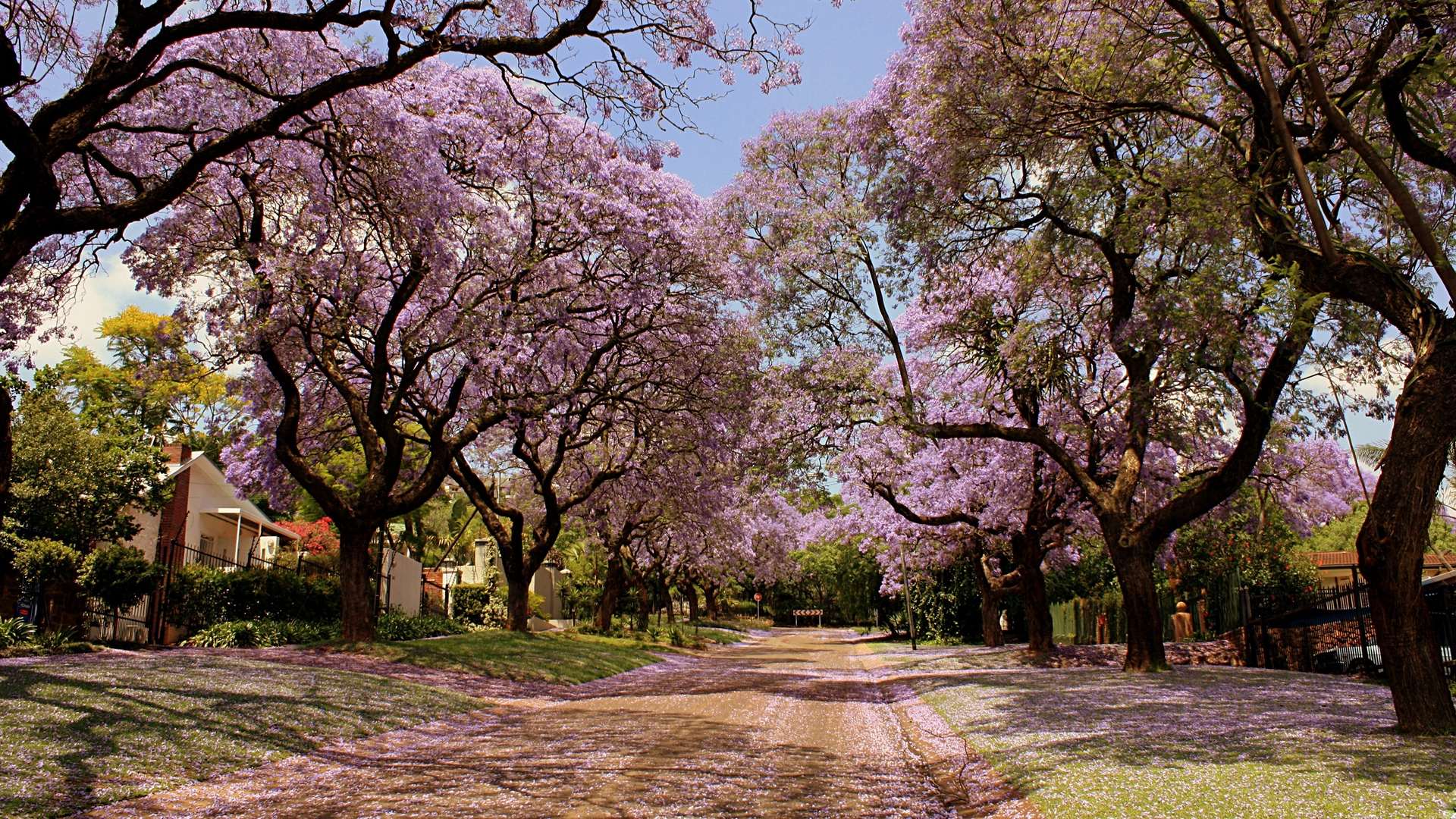 park trees flowers nature spring beautiful