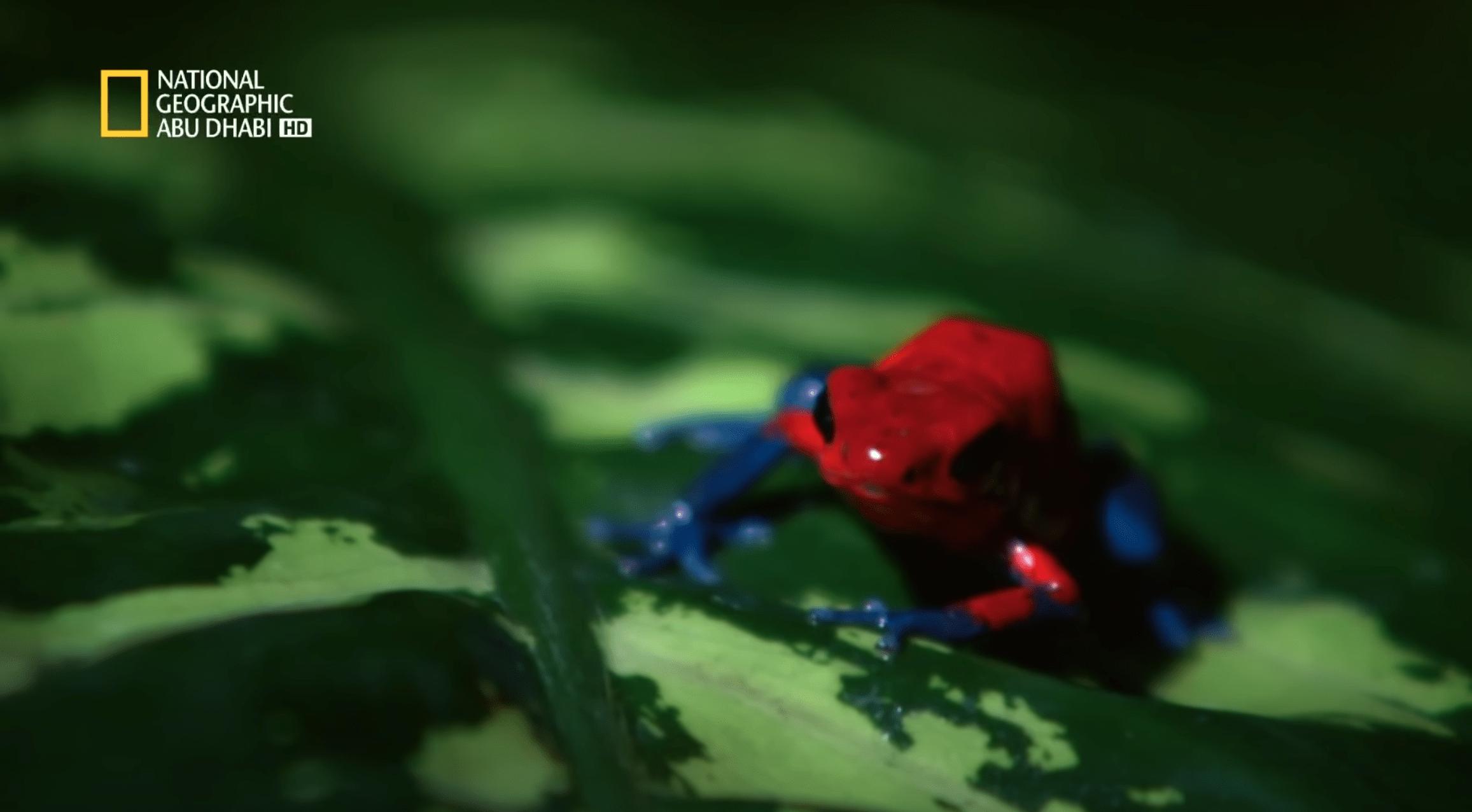 أشرس الكائنات في العالم – القتلة الصغار – بدون موسيقى