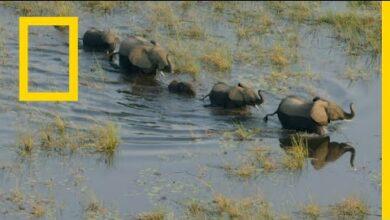 أوكافانغو نهر الأحلام: الفردوس | ناشونال جيوغرافيك أبوظبي - بدون موسيقى | Okavango Dream River: Paradise | National Geographic Abu Dhabi - No Music