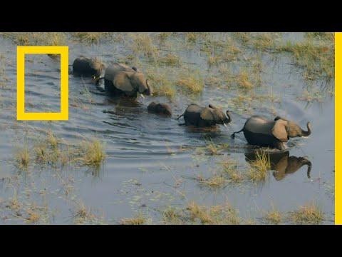 أوكافانغو نهر الأحلام الفردوس بدون موسيقى | Okavango Dream River: Paradise No Music (1)