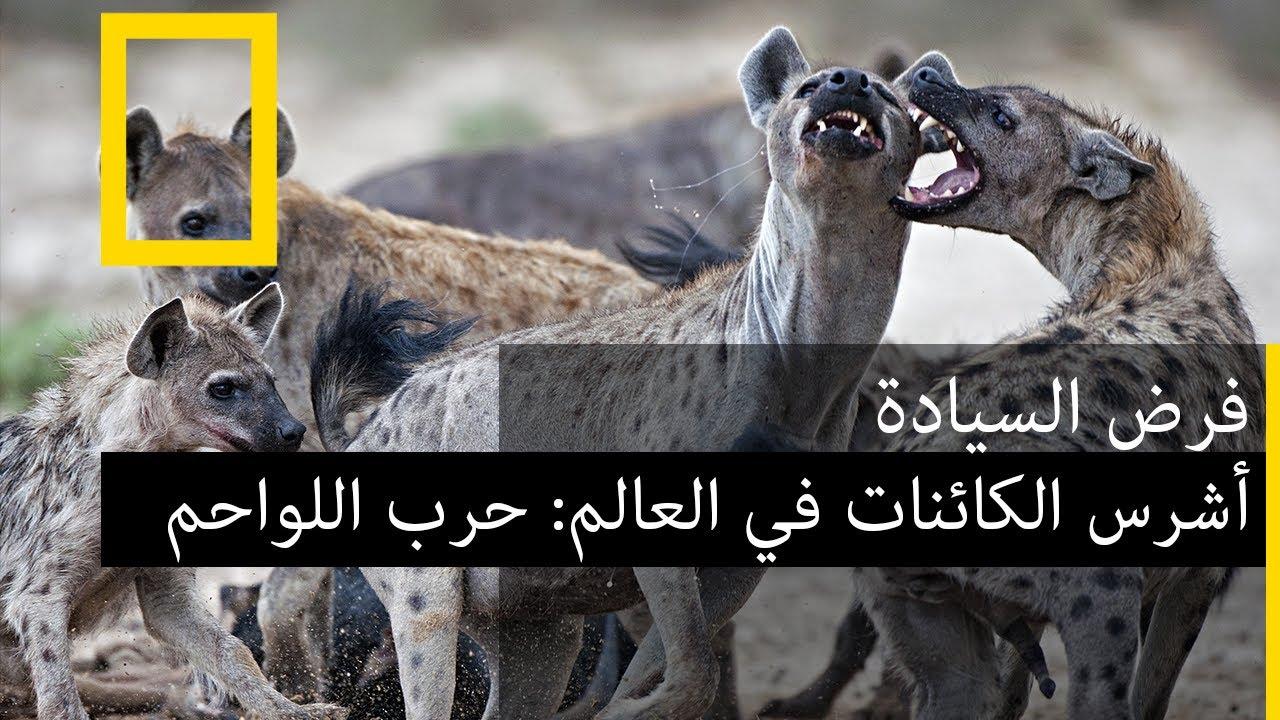 أشرس الكائنات في العالم حرب اللواحم بدون موسيقى | The fiercest animals in the world carnivore war – No Music