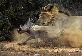 نادي قتال الحيوانات: القتلة العمالقة – بدون موسيقى