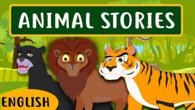 قصص الحيوان لتعليم اللغة الانجليزية للاطفال - بدون موسيقى | Animal Stories - No Music 20 فيديو