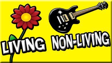 الأشياء الحية وغير الحية   اطفال – علوم   مستوى 1 – بدون موسيقى   Living Things and Nonliving Things No Music