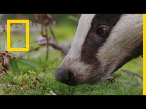 البراري الشمالية: مخلوقات التايغا بدون موسيقى | The Northern Wilds: The Taiga Creatures No Music