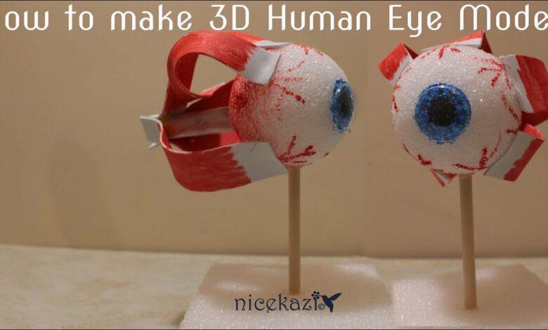 كيفية عمل نموذج ثلاثي الأبعاد للعين البشرية للمدرسة: مشروع علوم الأطفال ، مشروع العلوم والتكنولوجيا والهندسة والرياضيات ، طريقة سهلة بدون موسيقى | How to make 3D human eye model for school: kids science project, STEM project, easy way No Music (1 فيديو)