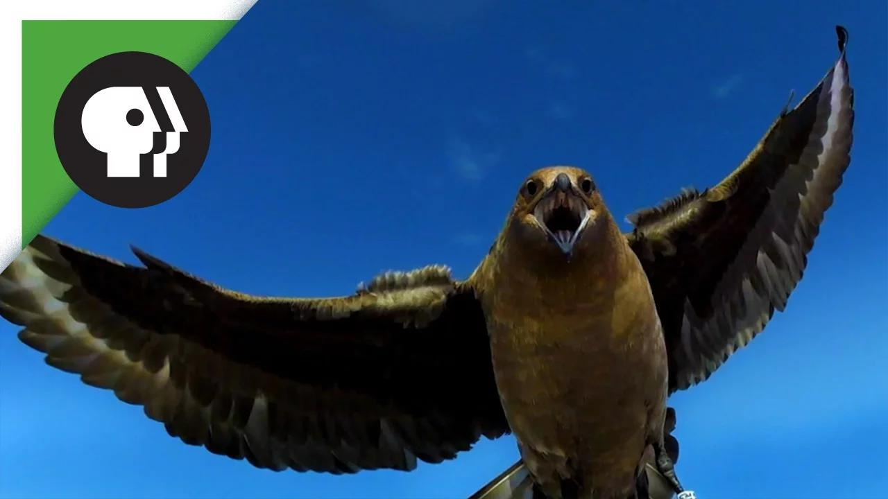 طيور بدون موسيقى | Birds No Music (24 فيديو)
