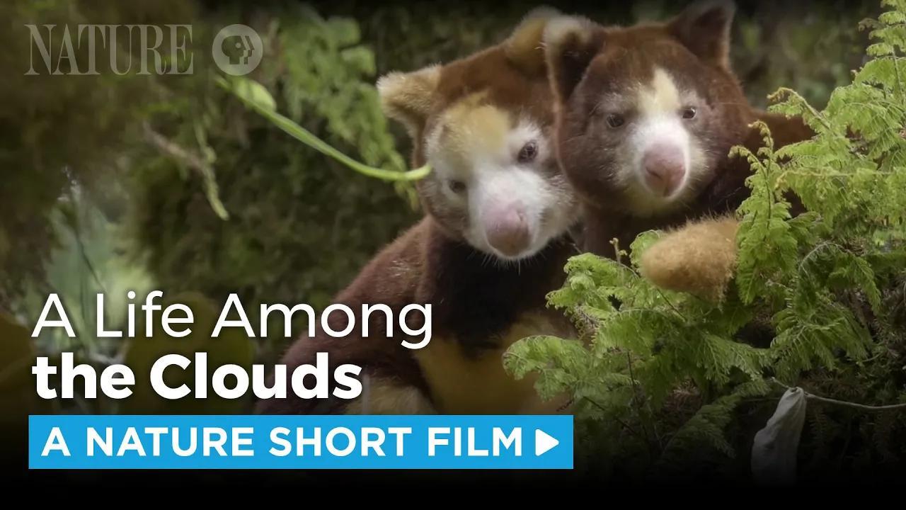 أفلام الطبيعة القصيرة بدون موسيقى | Nature Short Films No Music (8 فيديو)