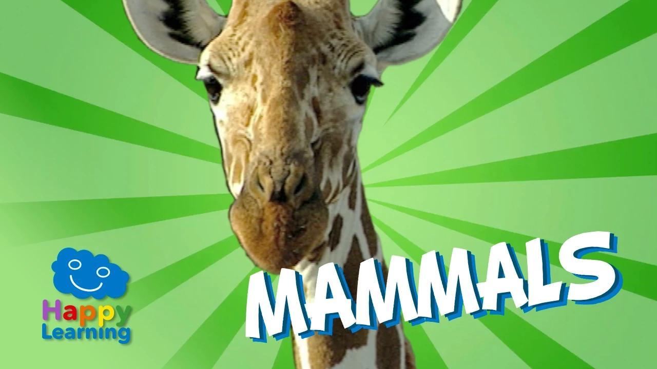 الثدييات | فيديو تعليمي للأطفال بدون موسيقى | Mammals | Educational Video for Kids No Music (1 فيديو)